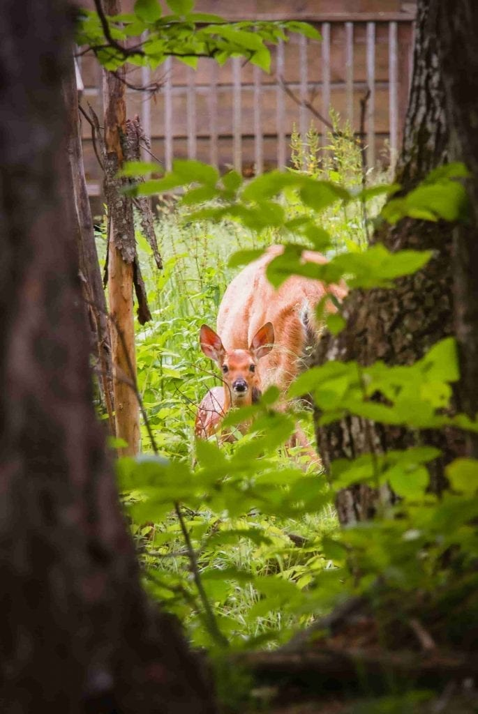 brown deer in the garden