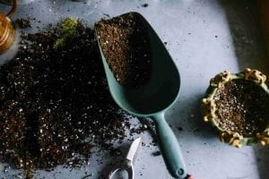 potting soil and trowel