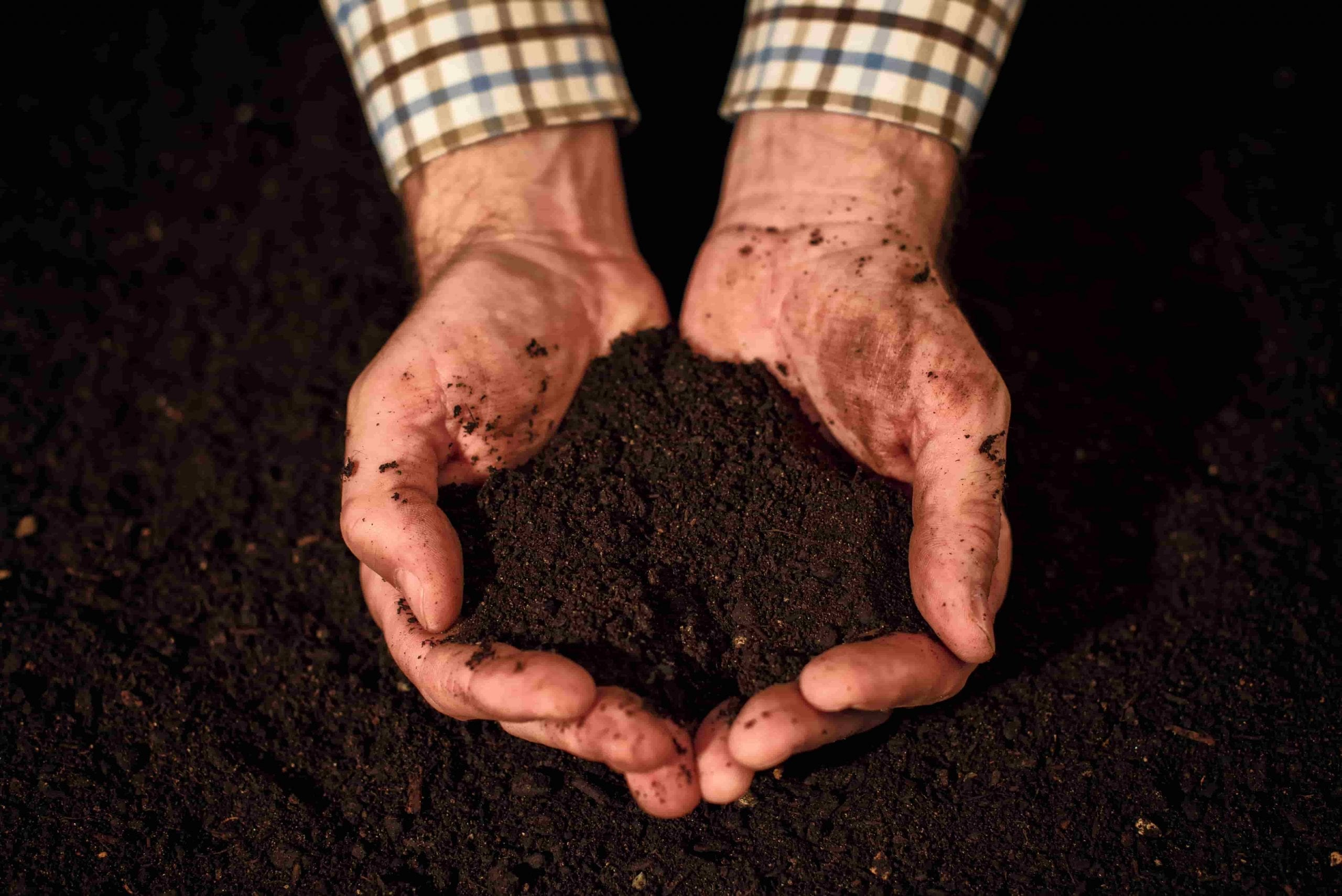 hands holding potting soil
