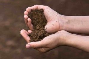loam soil in two hands