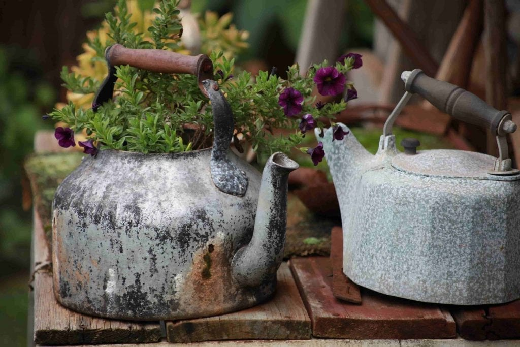 container plants planted in Two Gray Kettles on Table