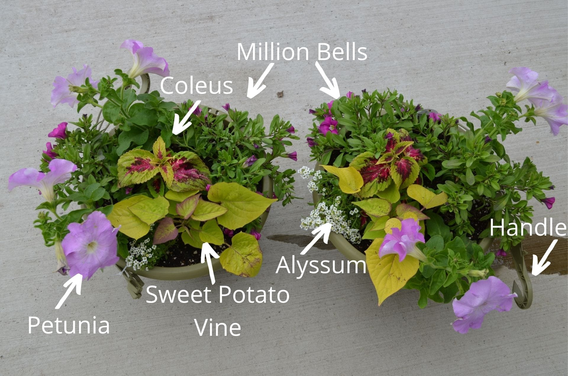 two patio containers with the flowers labeled in white