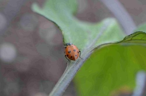 lone ladybug on leaf