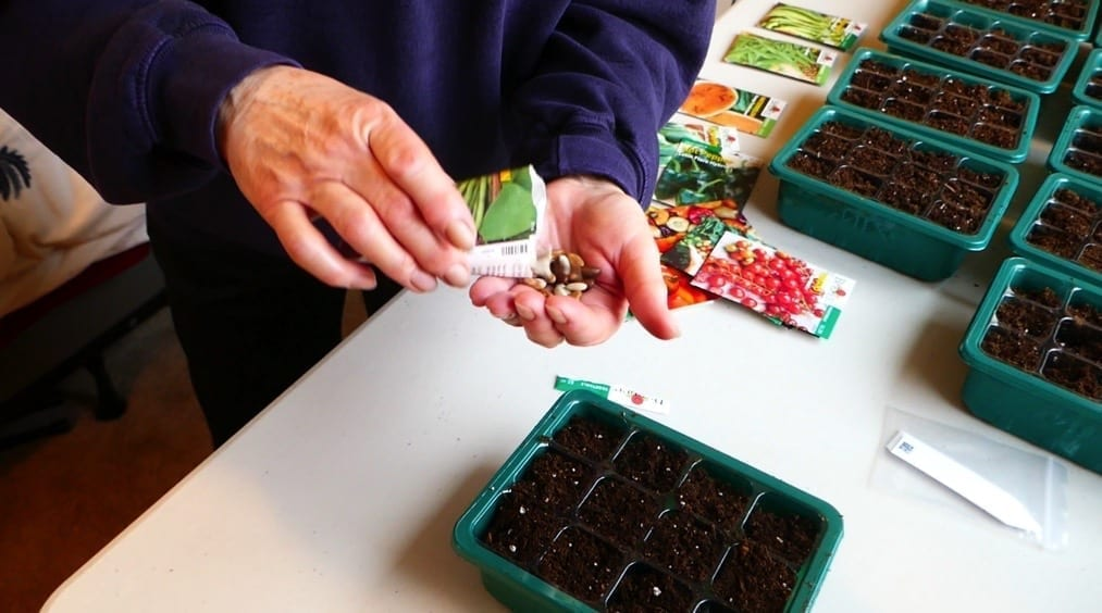 vegetable garden from scratch