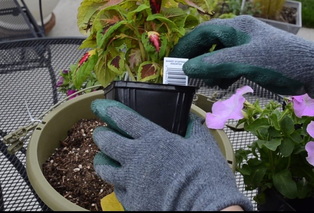 two hands with gardening gloves holding a plant start in black plastic container