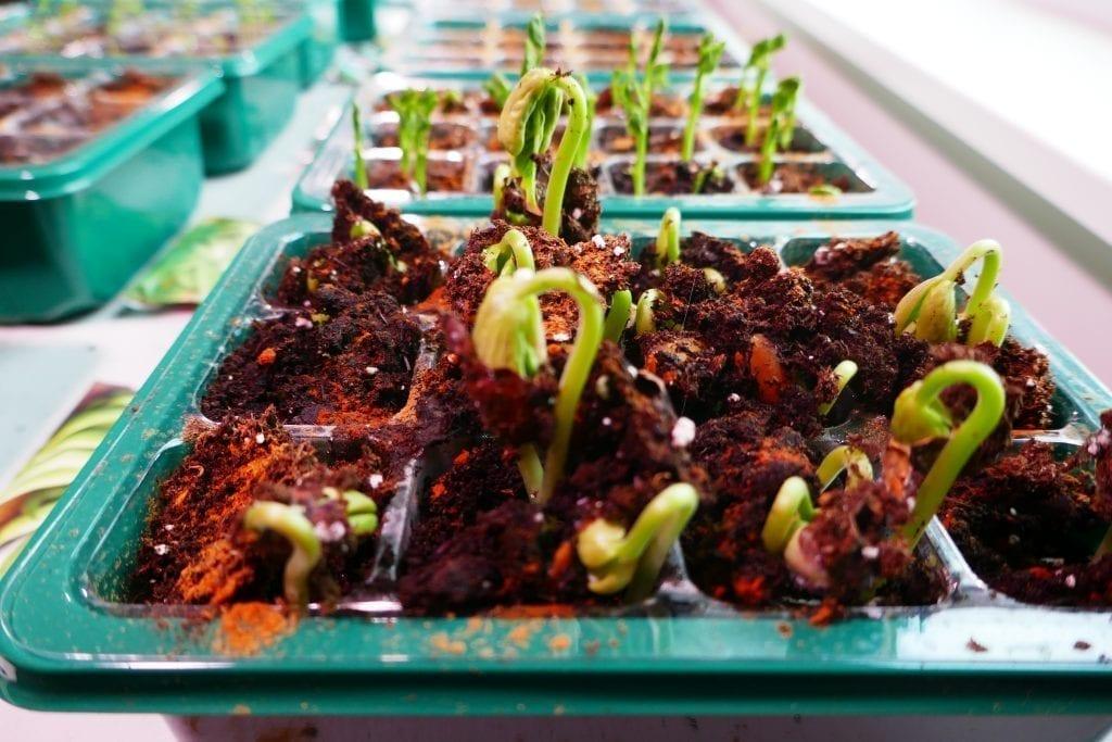 how to start seeds for vegetable garden